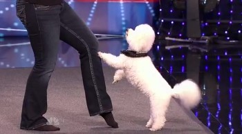 You're Going to LOVE This Doggie Dance Routine