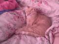 Michael Kitty