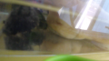 3 cute tiney turtles