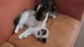 Cute Kitty Massage!