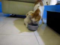 Puppy Tries to Eat Cat!
