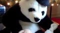 Shy, Singing, Songwriting Panda & Friends