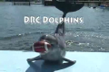 Dolphins Playing Football