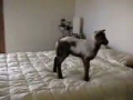 Kids Are Not the Only Ones Who Love to Jump on a Bed