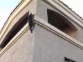 Feline Mission: Impossible