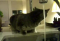 Cat Drinking Water from kitchen sink faucet