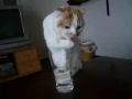 Cat Discovers How to Drink From a Glass