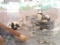 Panda Jail Break!