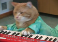 The Return of Keyboard Cat
