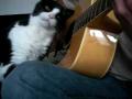 Cat Likes Guitar