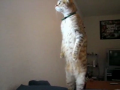 The Standing Cat (w/great music from Cowboy Bebop)