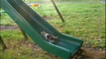 Kittens vs. Slide