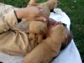 Mauled by Puppies!