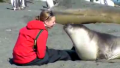 How to cuddle with an Elephant Seal