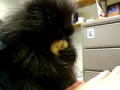 Baby Porcupine Catches the Hiccups