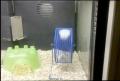 Hamster Bully