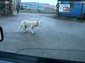 Funny dancing dog!