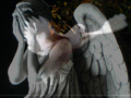 Wings Of A Dove:/DOLLY PARTON