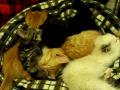 My Baby Kittens!