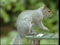 Mission Impossible Squirrell