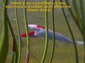Bible Verses Video 1