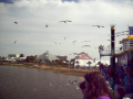 Attack of the Birds