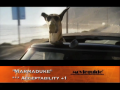 MARMADUKE review