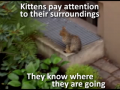 A Kitten Care Video Which Shows If Cats Know Their Way Back Home