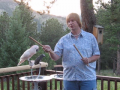 Parrot behavior tips / bond with your bird
