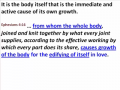 Ephesians - Lesson 23 - The Functioning Body (Part 2)