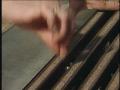Sewer Rat Surprise