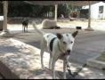 Summertime Brings More Abandoned Dogs in Israel