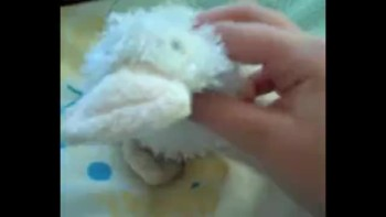 Webkinz How To Show 8