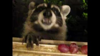 Hand Over The Grapes!