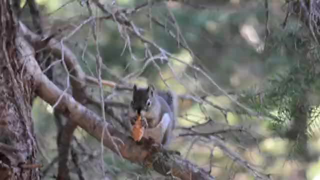 Squirrel Eating Lunch