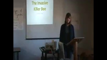Informative Speech- Killer Bees