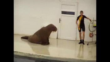 Walrus Workout @ The Gym