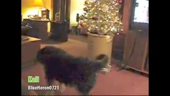 "Animals sing ""Deck the Halls"""