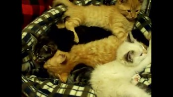 My Baby Kittens!!