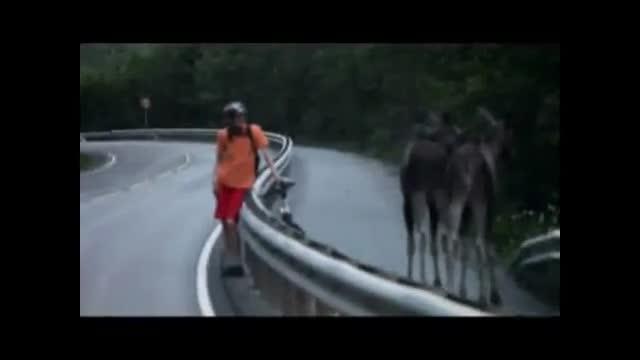 Bike Rider vs Moose