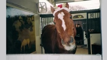 The World's Smartest Horse Wishes You A Very Merry Christmas