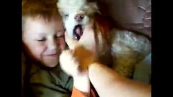 My Nephew And My Dog Snowball