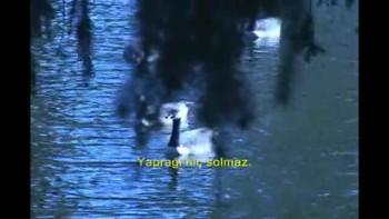 1:MEZMUR