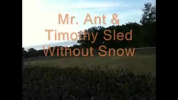 Mr Ant & Timothy Sledding without Snow