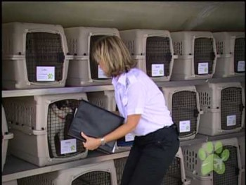 Pet Airways Commercial
