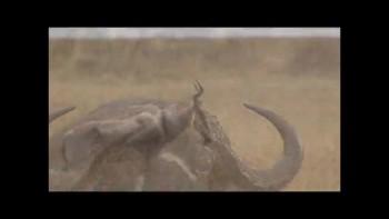 Incredible Wildlife at the Masai Mara in Kenya