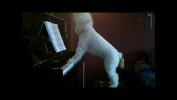 Cute dog playing piano and singing!