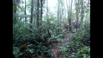Costa Rica 04-DaBounc
