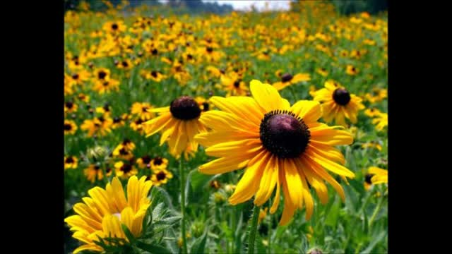 Politik-Flowers