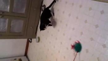 kitten fun